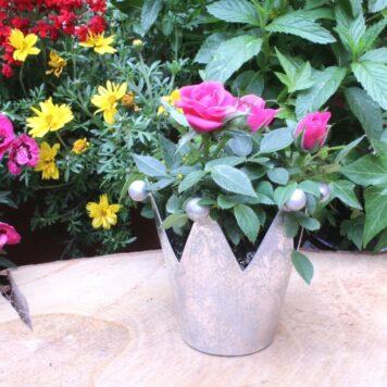 Blumen Krönchen Topf Silber