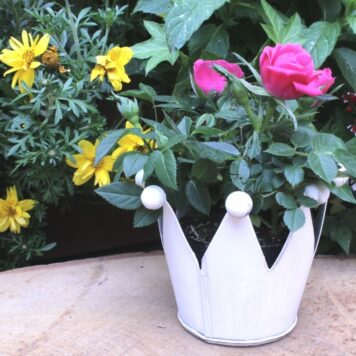 Blumen Krönchen Topf Weiss