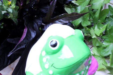 Pomme Pidou Spardose Frosch Freddy Braut