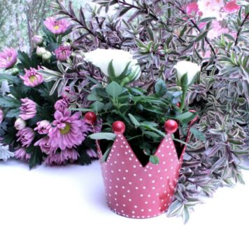 Blumen Krönchen Topf Petit Rot gepunktet