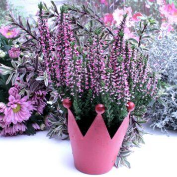 Blumen Krönchen Topf Rot