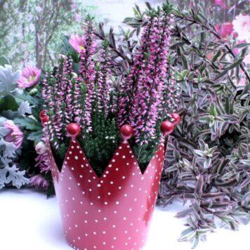 Blumen Krönchen Topf Rot gepunktet