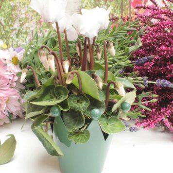 Blumentopf Krönchen Little Grün