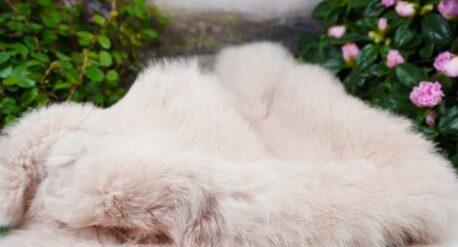 Dekofell Fellteppich Kaninchenfell gefärbt Rosa 42cm