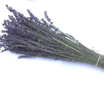 Lavendelstrauß Natürlich Getrocknet Natürlich Duftend